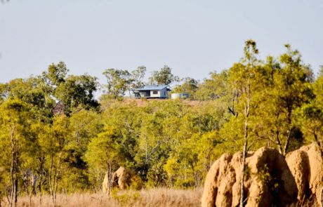 Ironbark on the Tableland